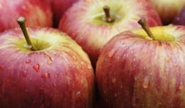apples-557